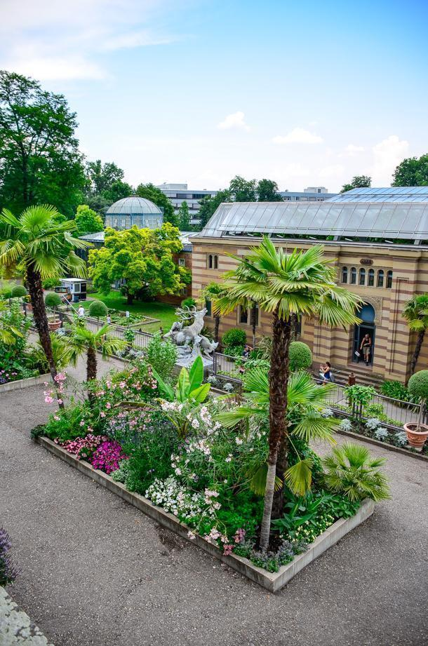 A birds-eye-view of the botanical gardens
