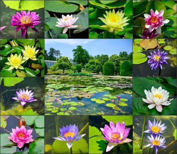 Worth the trip in itself - the water-lilly garden