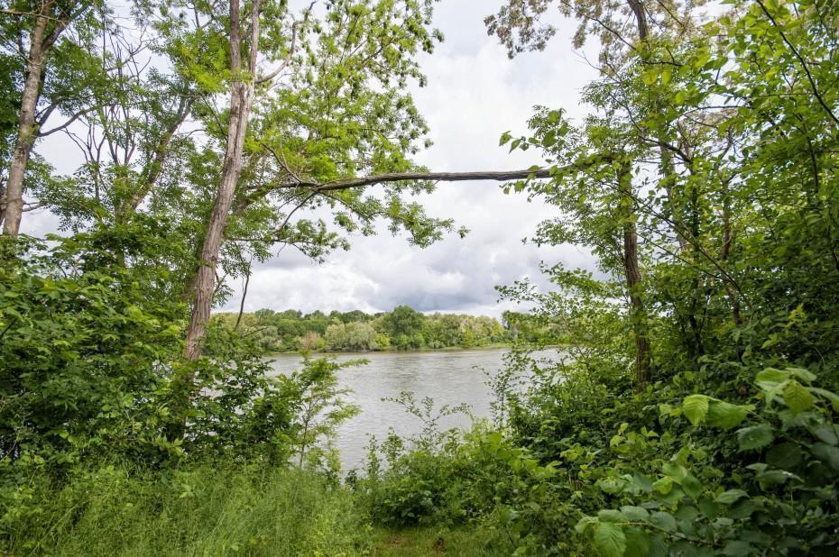 the Reserve Naturelle de Saint-Mesmin is a beautiful place to explore the nature of the Loire River.