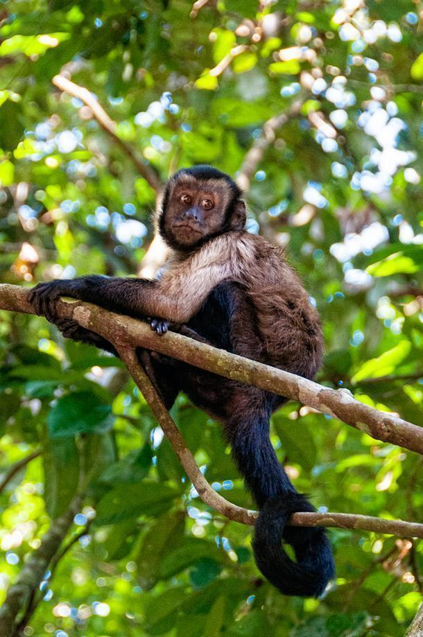 We spotted this little monkey free in the trees of the zoo.
