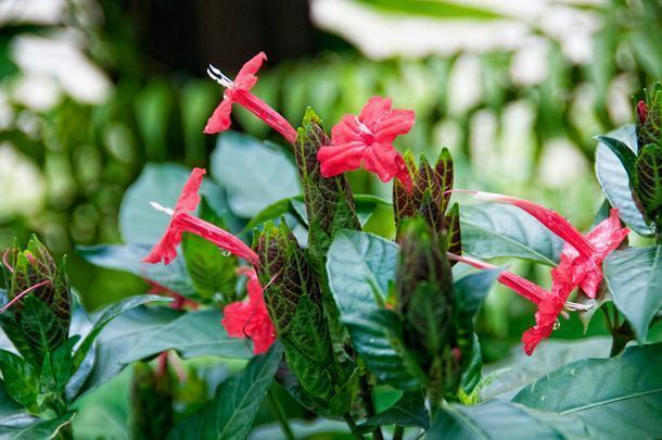 One of the botanical garden's missions is to preserve French Guiana's natural biodiversity