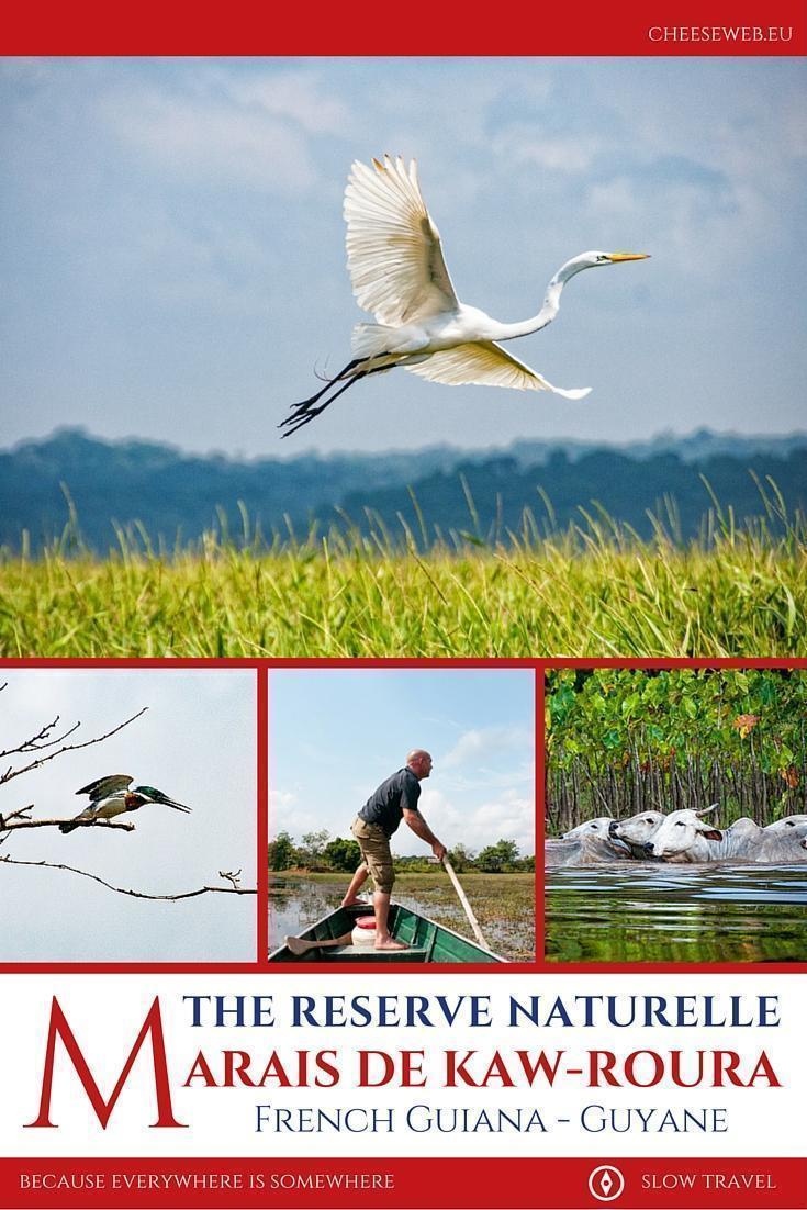 The reserve naturelle Marais de Kaw-Roura, French Guiana