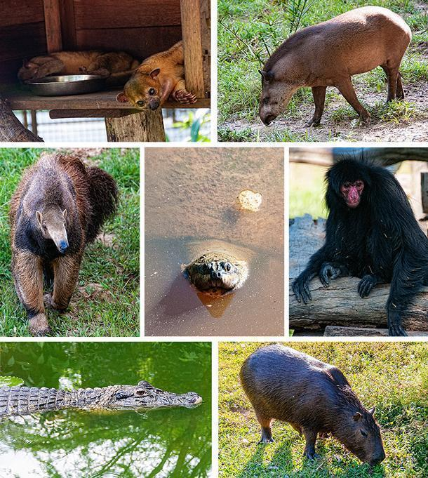 The Zoo de Guyane includes French Guiana's most iconic animals
