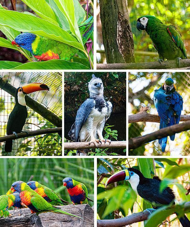 There are also a variety of colourful birds, including: Lorikeets, parrots, several varieties of toucan, and the Harpy Eagle, the largest raptor in the Americas.