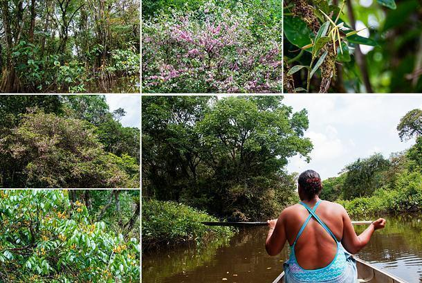 Canoeing brought us close to the nature of the Amazonian forest