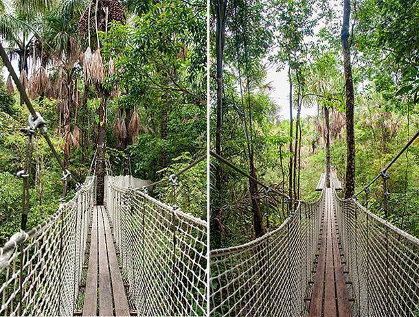 The Zoo de Guyane's new Canopy Walk