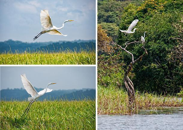These egrets were a sight to behold