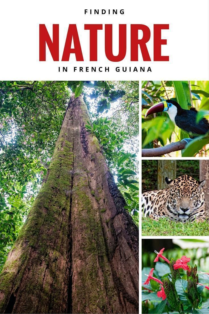 3 Easy ways to Experience Nature in French Guiana