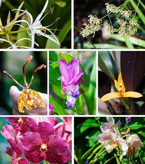 Just a few of the colourful orchids and flowers on display at the botanical garden.