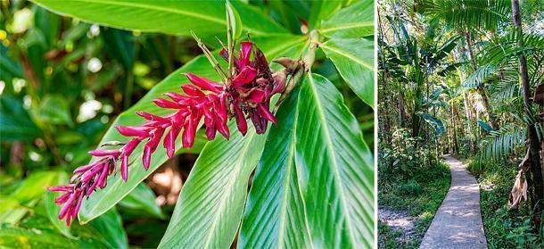 The zoo is planted with French Guiana's native flora