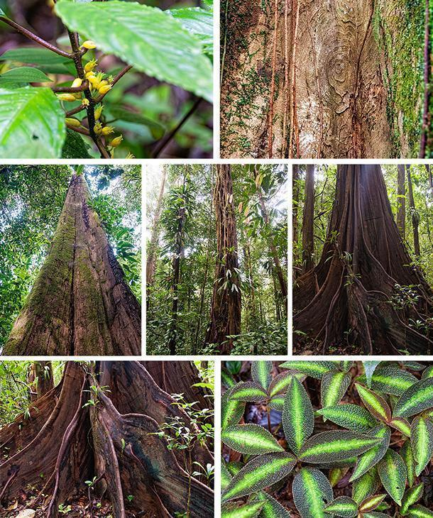 The Botanical trail of the Regional Nature Reserve Trésor teaches visitors about French Guiana's biodiversity