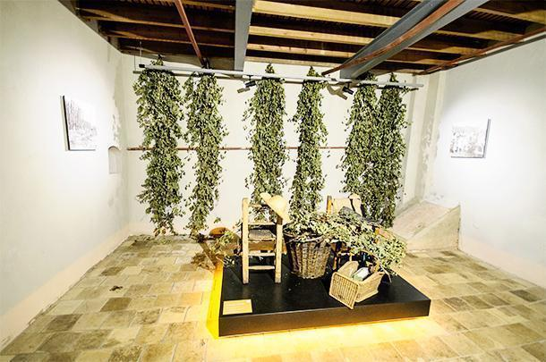 Poperinge is home to the Belgian hops museum