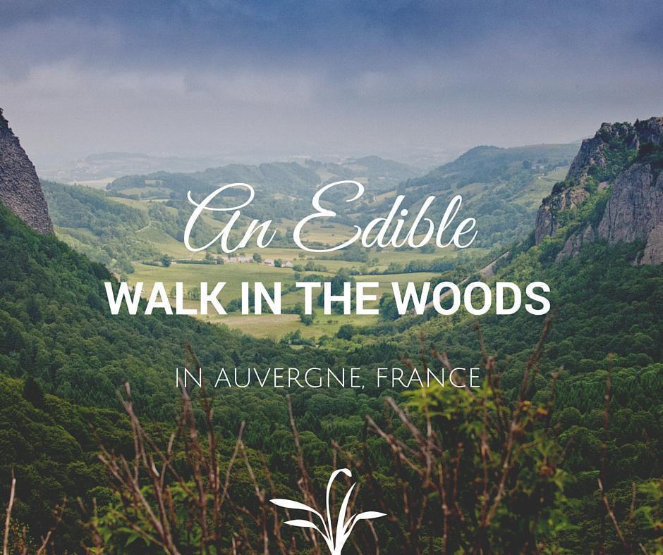 An edible walk in the woods in Auvergne, France
