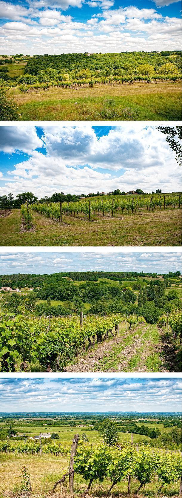 It's easy to see why the Feelys' chose Saussignac to call home