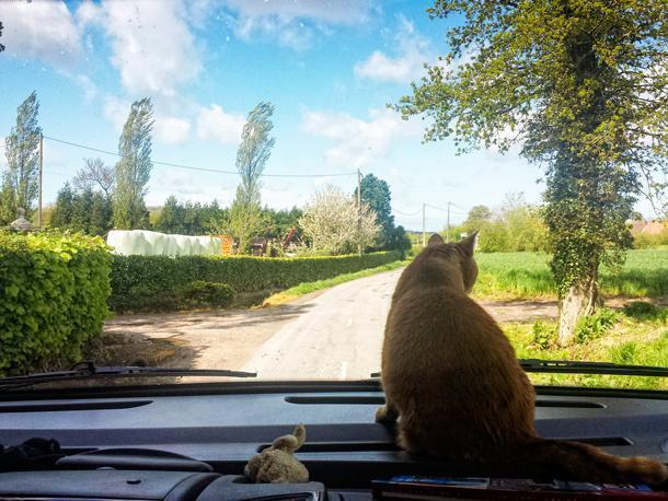 Orange finds her favourite spot in the motorhome is front and centre