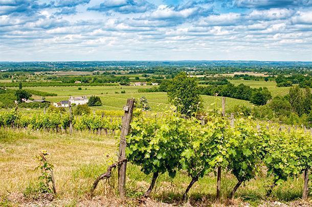 Tasting biodynamic wines in Dordogne, France