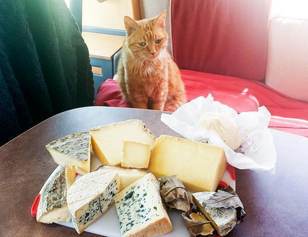 Orange is excited about the cheesy picnic offerings.