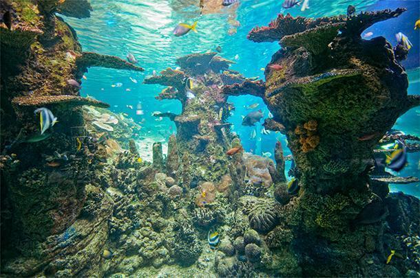 The NAUSICAA Aquarium is the largest in France