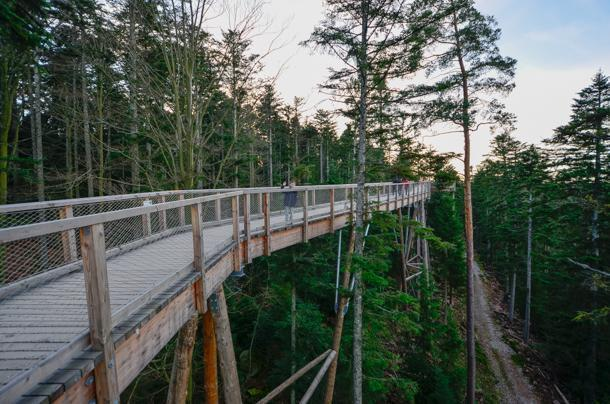 Brave the Treetop Walk at Bad Wildbad