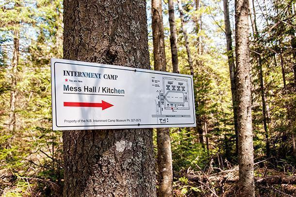 Foraging on the grounds of a former WWII internment camp near Fredericton