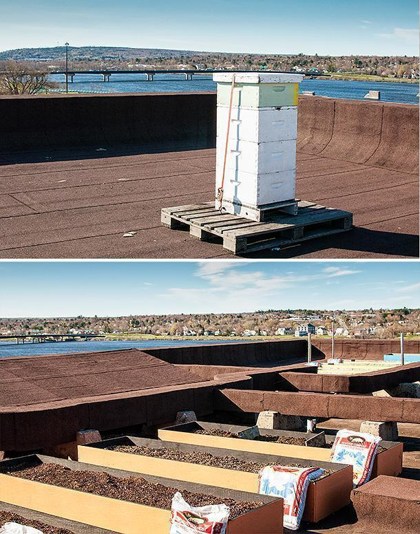 The Crowne's bees have a great view of Fredericton.