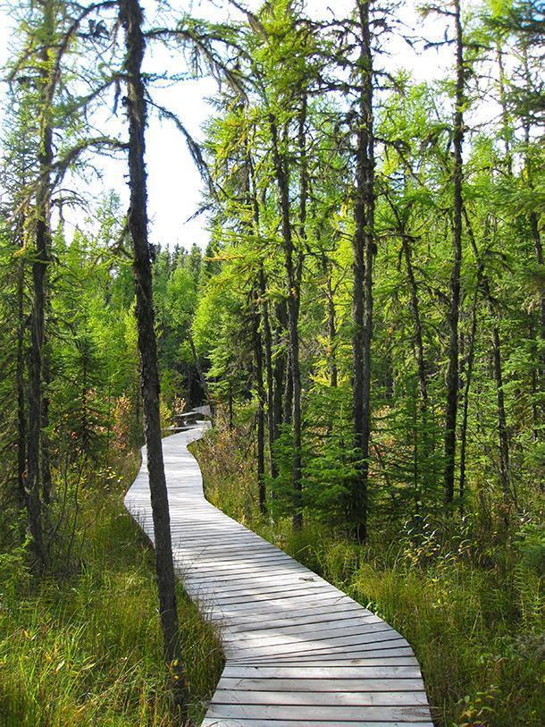 Hike near Waskesiu Lake (Photo by Carol Perehudoff)