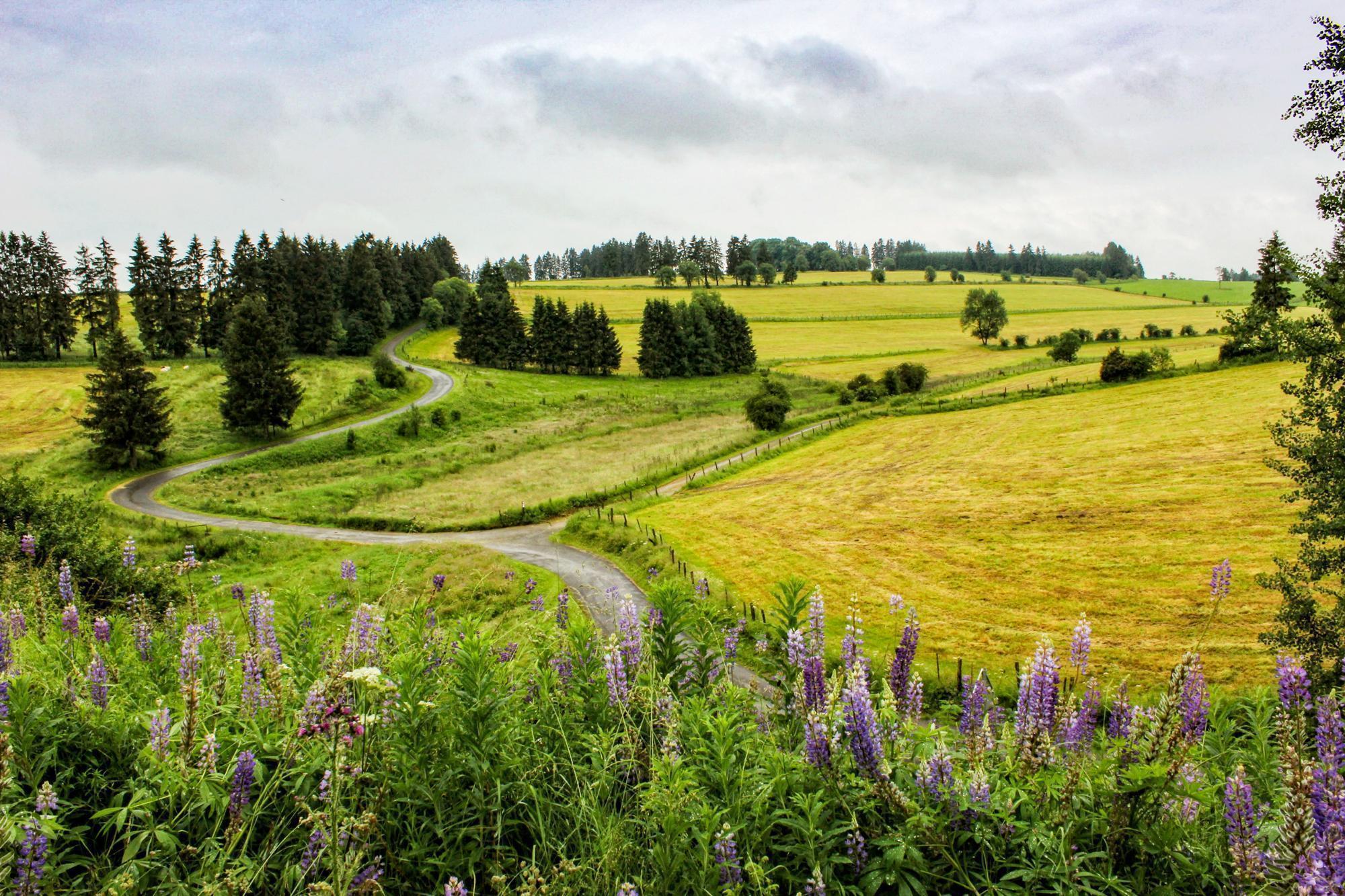 The long and winding road between Bütgenbach and Büllingen