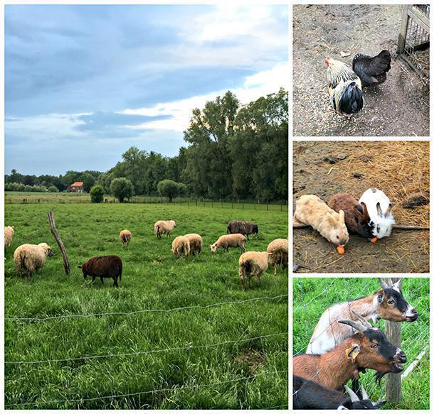 Plenty of farm animals at Hoevehotel Ronse