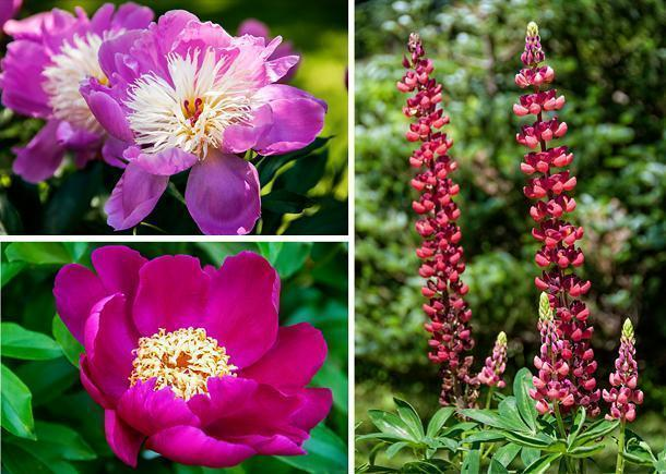 Stunning blooms can be found throughout the Botanical Garden