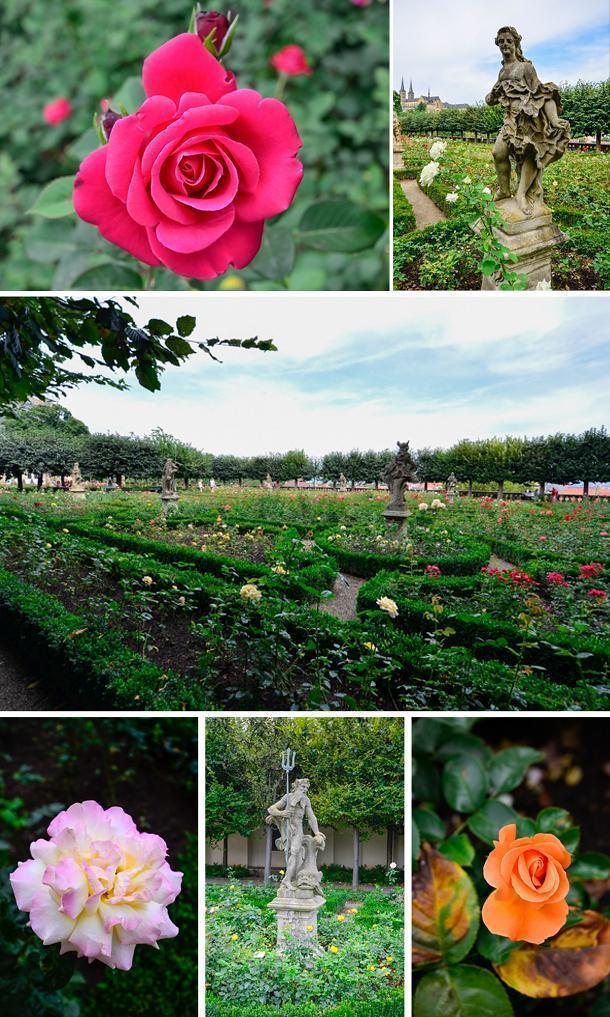 Take a walk in the Rose Garden
