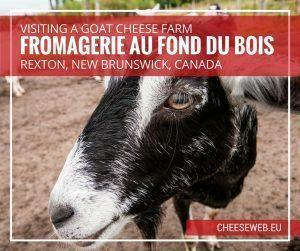 Visiting goat cheese farm fromagerie Au Fond du Bois in Rexton, New Brunswick, Canada