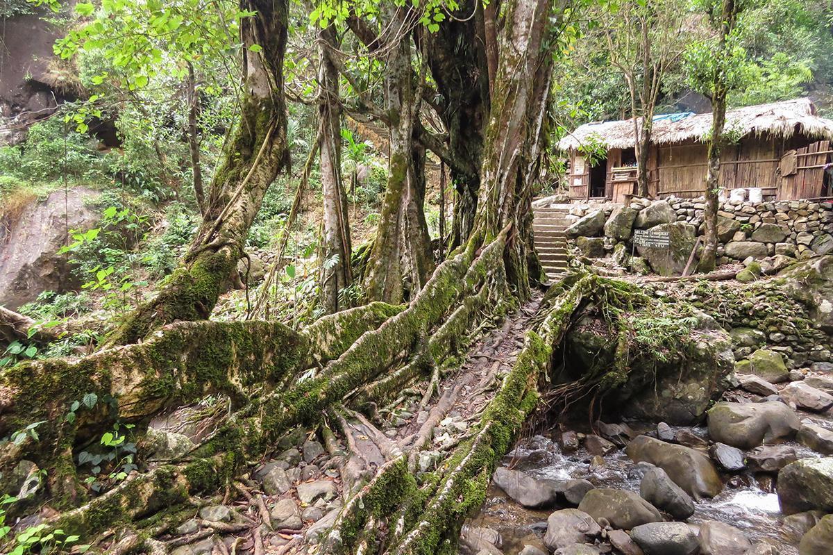 The tiny hidden gem of Nongriat Village, Northeast India