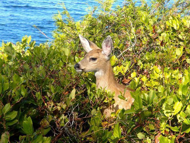 Nature spotting on Galiano Island, BC