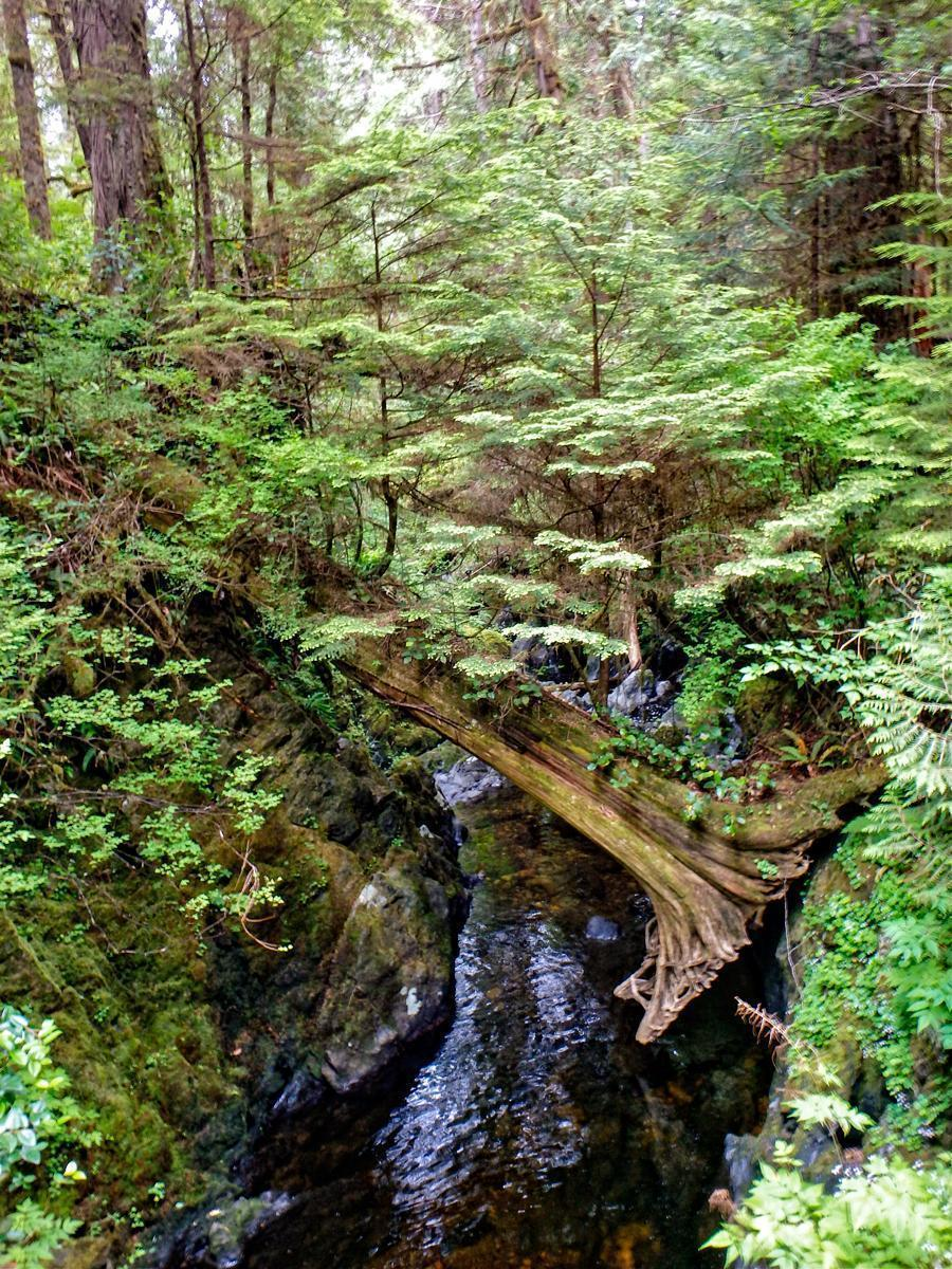 Hiking the West Coast Trail in British Columbia, Canada