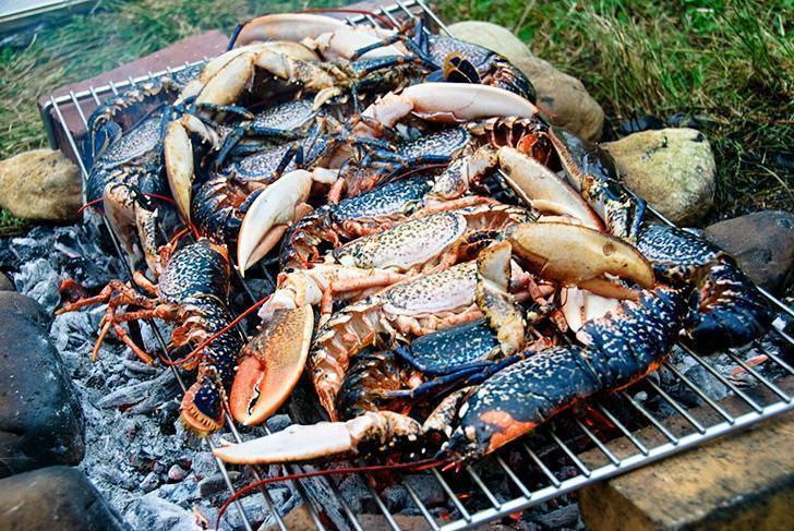 Grilling lobsters in the vineyards of Moenin, France