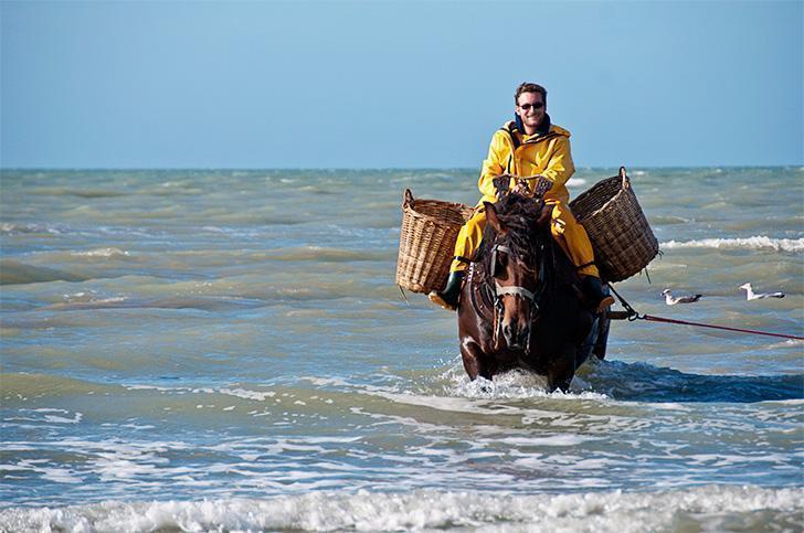 One of the last remaining shrimp fishermen on horseback in Oostduinkerk, Belgium