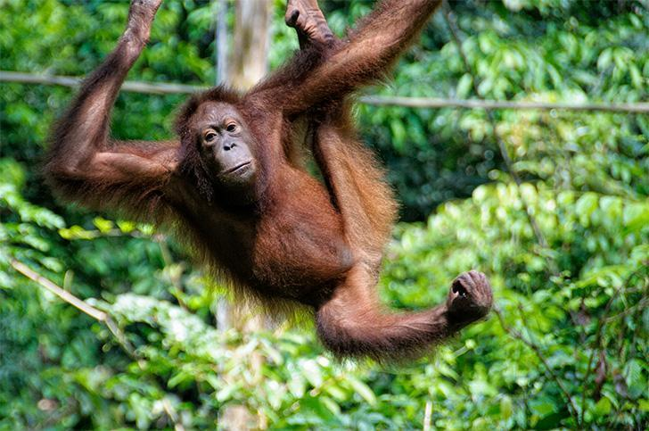 Getting up-close and personal with wildlife in Borneo was an unforgettable experience.