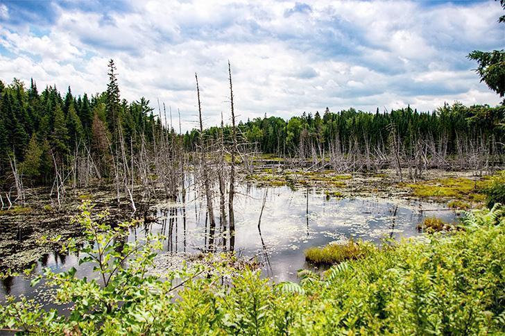 Mactaquac Provincial Park's Beaver Pond