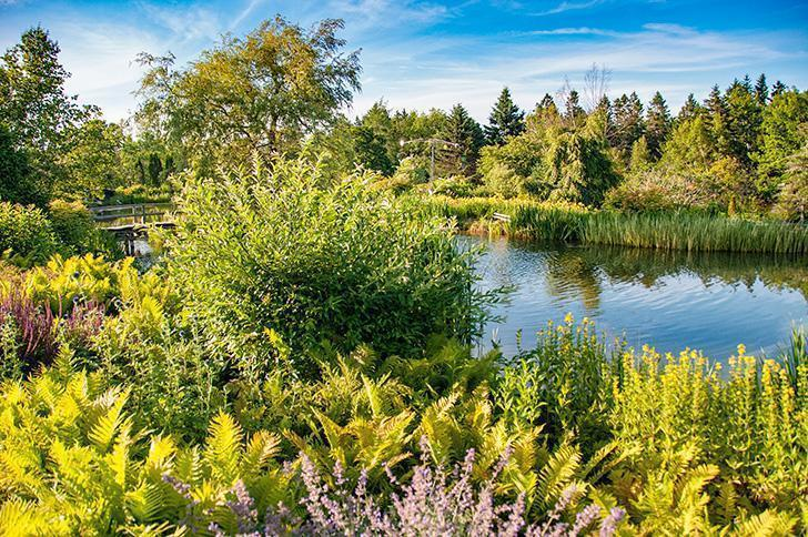 The pond at Kingsbrae Garden in the evening light