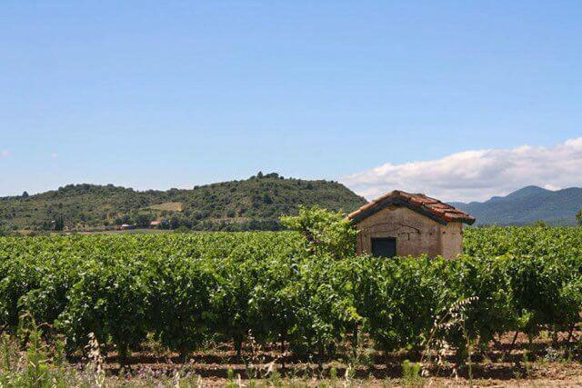 Explore the Languedoc-Roussillon wine region of France