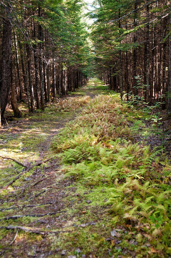Explore Beaubears' network of walking trails and the flora and fauna that abound on the island.