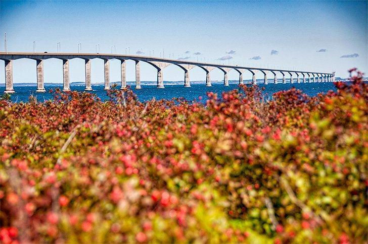 Get an amazing view of Confederation Bridge from Cape Jourmain National Wildlife Area