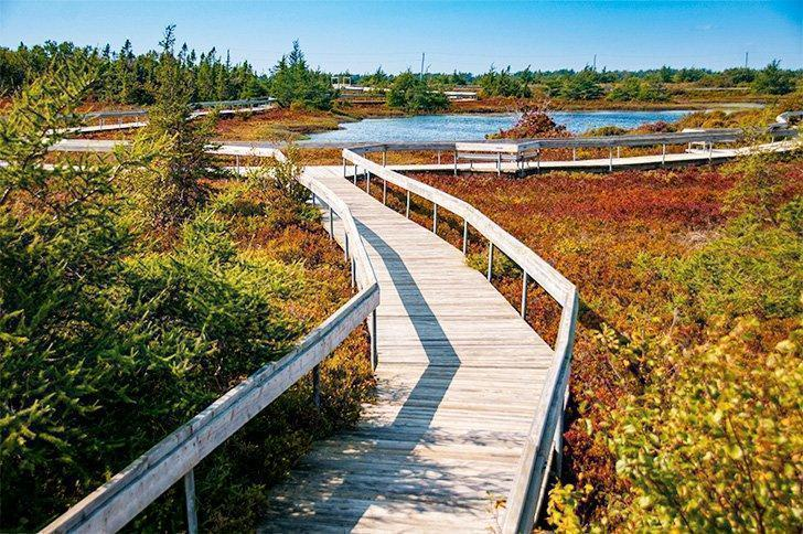 Discover the colourful peat bogs of Miscou Island.