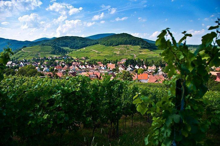 Alsace wine route tours