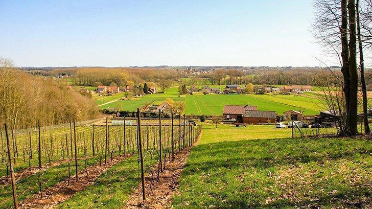 A vineyard with a view of the Hageland; Liemau wine domain.