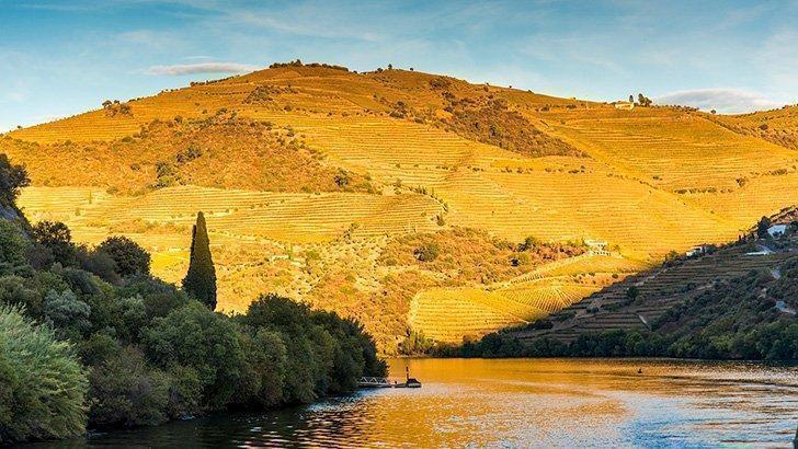 Douro Valley Portugal Wine
