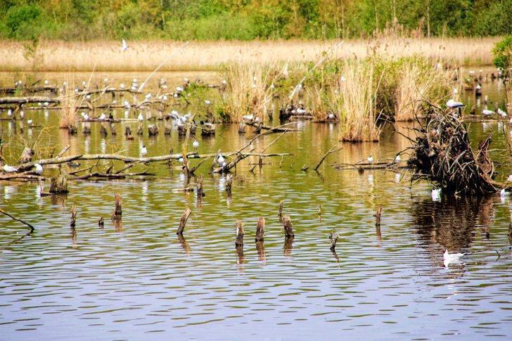 Het Vinne Provincial Domain in Flemish Brabant is a bird watcher's paradise.