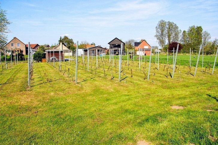 Don't miss a wine tasting at Hagegoud Vineyard, in Belgium's Hageland.