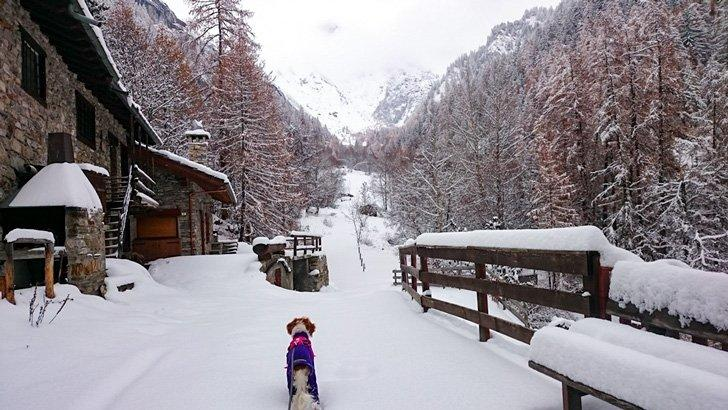 Perfect cross-country skiing conditions in Courmayeur, Aosta Vally, Italy