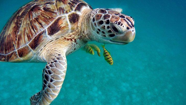 Visit with sea life on a glass bottom boat tour in Mauritius.